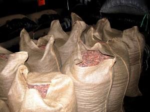 cacao en saco 5
